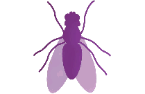 Fly Png, Transparent Fly Vector