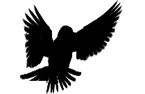 Flying Bird Png Image For Download