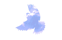 Flying Bird Png Silhouette