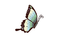 Flying Blue Butterfly PNG Image