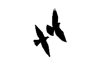 Doves Flying Png Hd Image, Transparent Doves Flying Clipart