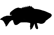 Muskie Fish Png Full Hd