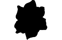 Gardenia Png Clipart Image For Download