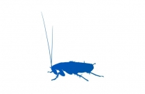 Cockroach Png, Transparent Cockroach Hd Wallpaper