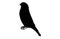 Goldfinch Finch Bird Png Free Download