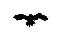 Hawk Png Image For Download