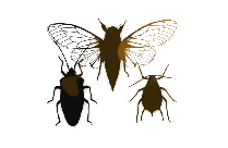 Hemiptera Art Png Clipart Image For Download