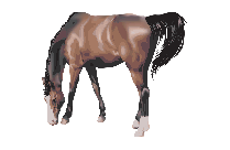 Horse Animal Png Clipart