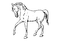 Horse Drawing Png Vector
