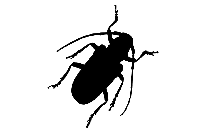 Transparent Cockroach Drawing