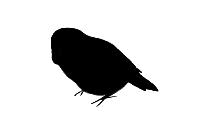 Kakapo Png Silhouette Transparent Background