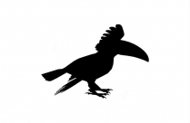 Keel Billed Toucan Silhouette Transparent Background