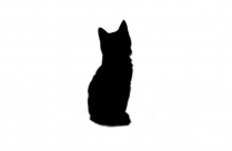Kittens Png Transparent Clipart For Download