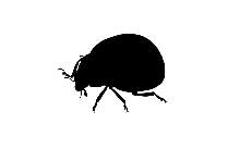 Scarabs Png Full Hd With Transparent Bg, Insect Png Full Hd