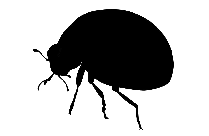 Ladybug Insect Art Png Black And White