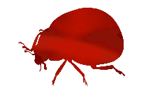 Ladybug Insect Png Image For Download