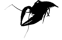 Lobster Png, Transparent Lobster Hd Wallpaper