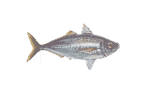 Cartoon Fish Transparent PNG Image