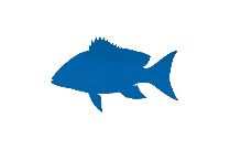 Mangrove Snapper Png Transparent Clipart For Download