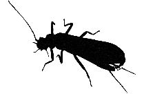 Transparent Beetle Wings Png Vector