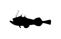 Jack Fish | Ulua Fish Png Transparent Clipart For Download