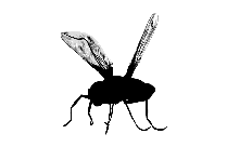 Housefly Insect Png Transparent Image