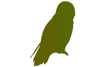 Owl Bird Art Png Transparent Clipart For Download