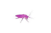 Cockroach Png Clipart Download