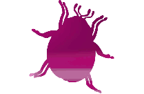 Bee Png With Transparent Background