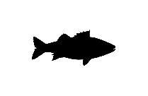 Sea Bass Png Background