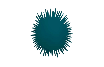Sea Urchin Hd Png Download
