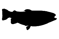Transparent Fluke Fish Clipart, Fluke Fish Png Image
