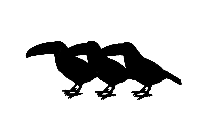 Birds Png Clipart Image For Download