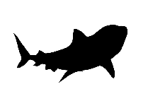 Shark PNG HD Images, Stickers, Vectors