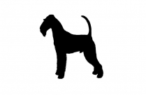 Transparent Airedale Terrier Clipart, Airedale Terrier Png Image