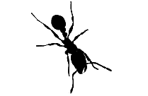 Transparent Ant Insect Clipart, Ant Insect Png Image