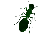 Transparent Ant Silhouette, Ant Png Image
