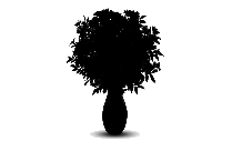Transparent Chrysanthemum Flower Png Cartoon