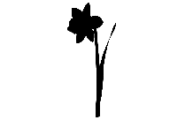 Funeral Flower Png Transparent Image For Download