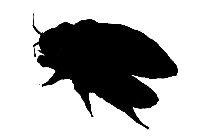 Transparent Bed Bug Silhouette Png