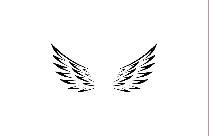 Transparent Bird Wing Outline Png Vector
