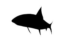 Orca Png Image With Transparent Background