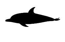 Bottlenose Dolphin Art Png Free Clipart