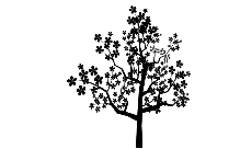 Pine Tree Png Black And White