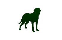 Wolf Png Free