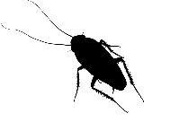 Cockroach Png Hd Transparent Image