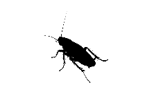 Transparent Cockroach Icon