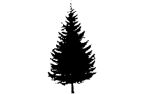Cool Tree Art Png Background Hd