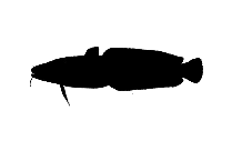 Saltwater Fish Png Silhouette