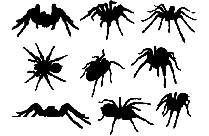 Transparent Different Kind Spiders Silhouette Png